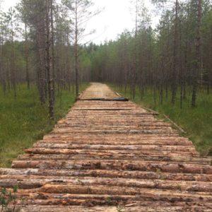 Директор лесного хозяйства